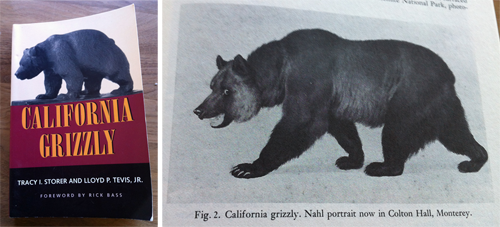 California Grizzly Cover Nahl Drawing
